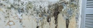 mold on walls cleanup
